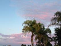 Rosa Wolken und Palmen Stockfotos