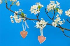 Rosa wood hjärtor som hänger från päronträdfilial med blomningar Royaltyfri Bild