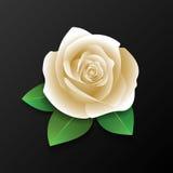 Rosa y hojas realistas Foto de archivo libre de regalías