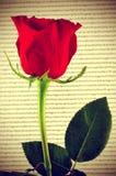 Rosa y libro del rojo, para el santo Georges Day en Cataluña, España Fotos de archivo libres de regalías
