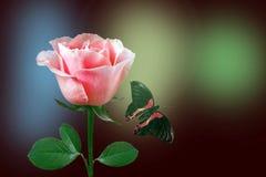Rosa y mariposa del rojo Imagen de archivo libre de regalías