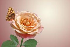 Rosa y mariposa del rojo Imagenes de archivo