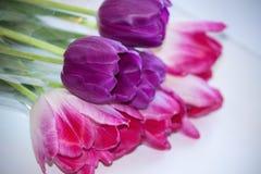Rosa  y ramo violeta de los tulipanes Fotografía de archivo libre de regalías