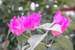 Rosa y verde lima sutiles fotos de archivo