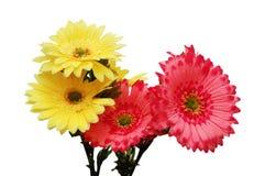 rosa yellow för blommor Royaltyfri Foto