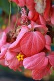 Rosablätter Lizenzfreies Stockbild