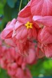 Rosablätter Stockfotografie