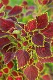 Rosablätter Stockfotos