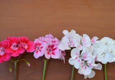 Rosado, blanco, rojo, flor, marco, tarjeta de felicitación, día de fiesta, fondo, modelo, modelo, tela, material, primavera, aleg Foto de archivo