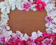 Rosado, blanco, rojo, flor, marco, tarjeta de felicitación, día de fiesta, fondo, modelo, modelo, tela, material, primavera, aleg Imagen de archivo