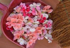 Rosado, blanco, rojo, flor, marco, tarjeta de felicitación, día de fiesta, fondo, modelo, modelo, tela, material, primavera, aleg Fotos de archivo