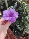 Rosado o púrpura imagen de archivo libre de regalías