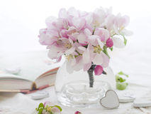 Rosafarbene Apfelblüte Stockbild