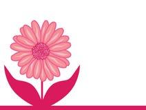 Rosafarbene Asterblume lizenzfreie abbildung