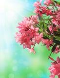 Rosafarbene Blüte Stockfotografie