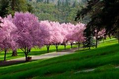 Rosafarbene Blüten Lizenzfreies Stockbild