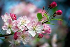 Rosafarbene Blüten Stockfotografie