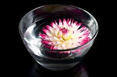 Rosafarbene Blume Stockbilder