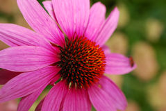 Rosafarbene Blume Stockfotos