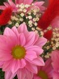 Rosafarbene Blume Stockfoto