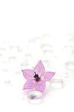 Rosafarbene Blume auf Wasser-Tropfen Stockfoto