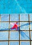 Rosafarbene Blume bis zum blauer des Pools Lebensdauer noch Stockfoto