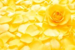 Rosafarbene Blume des Gelbs Stockfotos