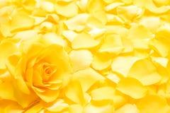 Rosafarbene Blume des Gelbs Stockbilder