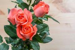 Rosafarbene Blume des Rosas Stockfoto