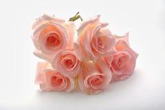Rosafarbene Blume des Rosas Lizenzfreies Stockbild