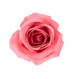 Rosafarbene Blume des schönen Rosas Stockfotografie