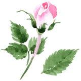 Rosafarbene Blume des Wildflowertees in einer Aquarellart lokalisiert Lizenzfreie Stockbilder
