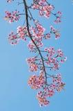 Rosafarbene Blume, die im Frühjahr blüht Stockfotos