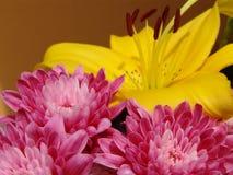 Rosafarbene Blume - gelber Hintergrund Stockfotografie