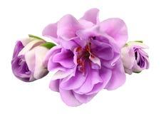 Rosafarbene Blume getrennt auf Weiß Stockfotografie
