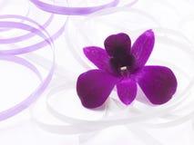 Rosafarbene Blume mit Satinfarbband Stockfoto