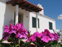 Rosafarbene Blume vor Haus Stockfotografie