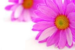 Rosafarbene Blumen Stockfotografie