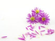 Rosafarbene Blumen Stockbild