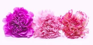Rosafarbene Blumen lizenzfreies stockbild