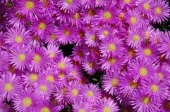 Rosafarbene Blumen Stockfoto
