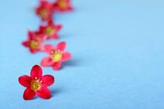 Rosafarbene Blumen auf Blau Stockfotos