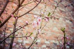 Rosafarbene Blumen auf dem Baum Lizenzfreie Stockfotos