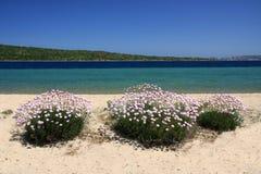Rosafarbene Blumen auf dem Strand Stockbild