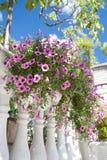 Rosafarbene Blumen auf dem Zaun Lizenzfreie Stockbilder