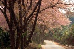 Rosafarbene Blumen auf der Straßenseite Stockfotos