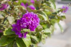 Rosafarbene Blumen auf einem grünen Hintergrund Lizenzfreie Stockfotografie