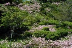 Rosafarbene Blumen auf Hügel Stockfotografie