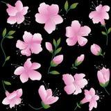 Rosafarbene Blumen auf schwarzem Hintergrund. Stockbilder