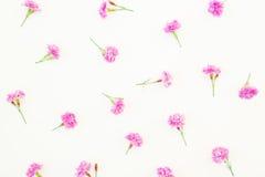 Rosafarbene Blumen auf weißem Hintergrund Flache Lage, Draufsicht Blumenmuster von wilden Blumen Lizenzfreies Stockfoto